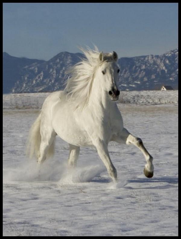 photo de cheval pour fond d'ecran - Photos de nature